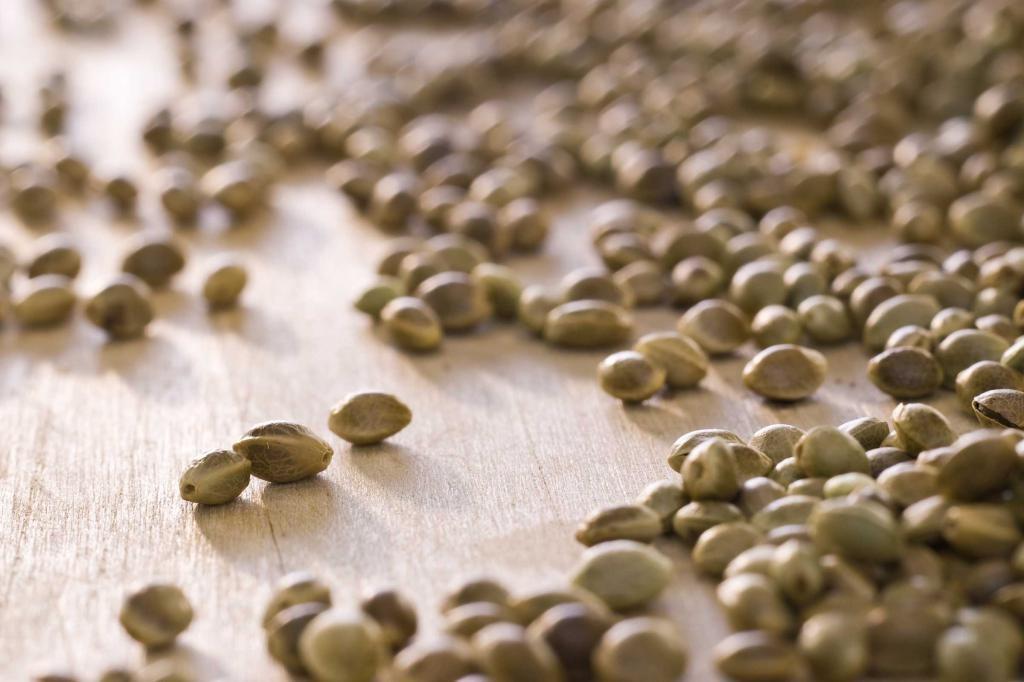 Семена в новгороде как нижнем конопли купить и индуизм марихуана